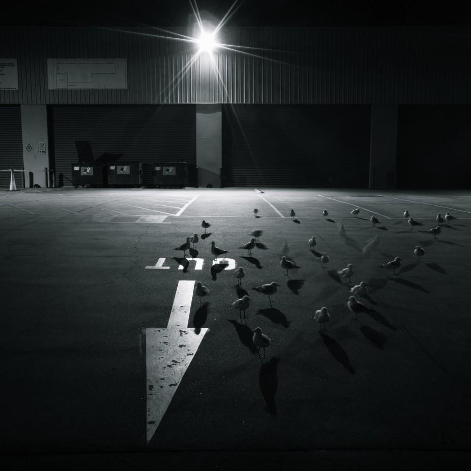 seagulls-1