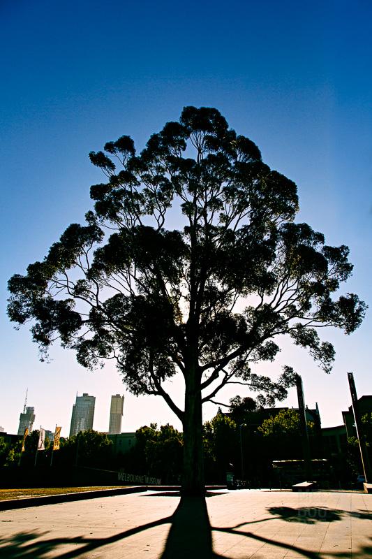 melbourne museum tree-